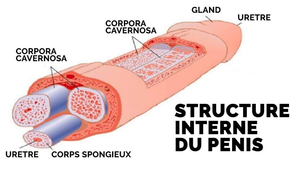 jelqing penis interne