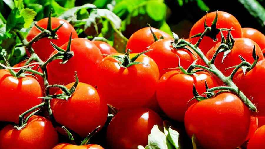 tomate pour bander rapidement